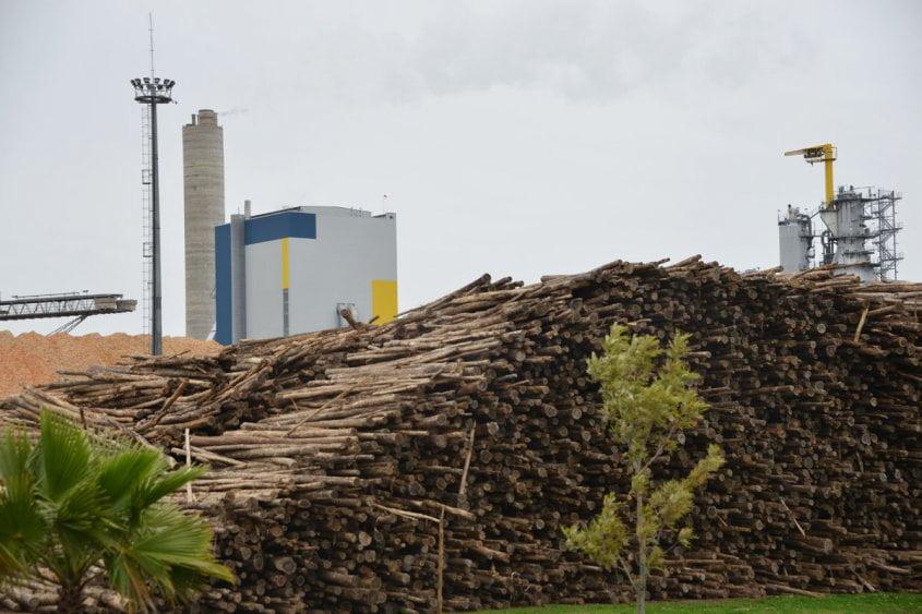 Uruguay marca el rumbo en energía derivada de biomasa