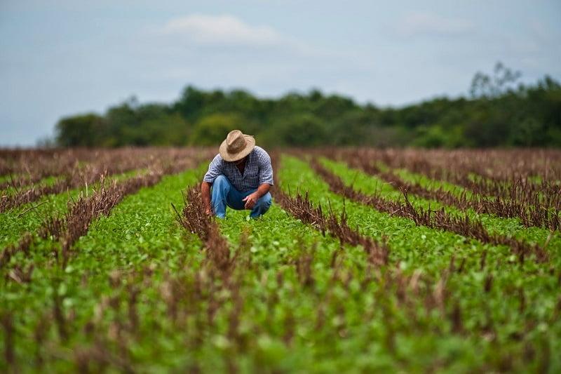 Cooperativa lanza el primer programa de carbono propiedad de agricultores y ya tiene a un gigante de cliente