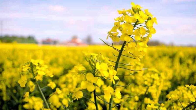 Las proteínas vegetales quieren ser protagonistas en la química verde
