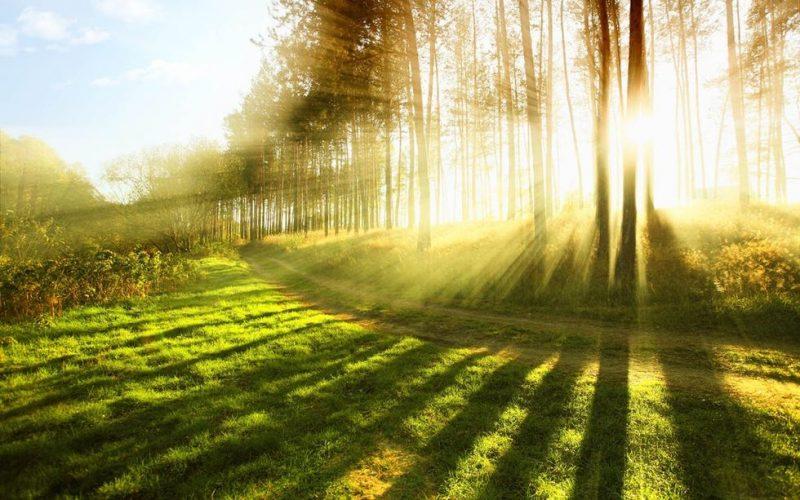 En el día Mundial por la reducción de emisiones la Cámara de la Madera recuerda la importancia de cuidar los bosques