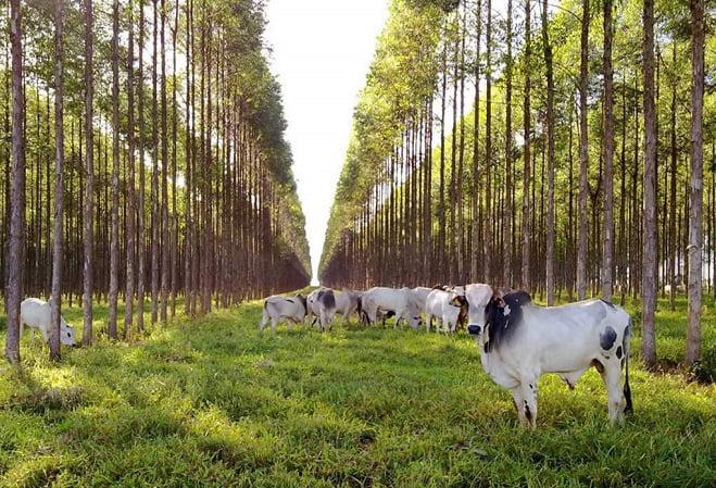 Seminario virtual sobre los sistemas foresto ganaderos para una ganadería baja en carbono