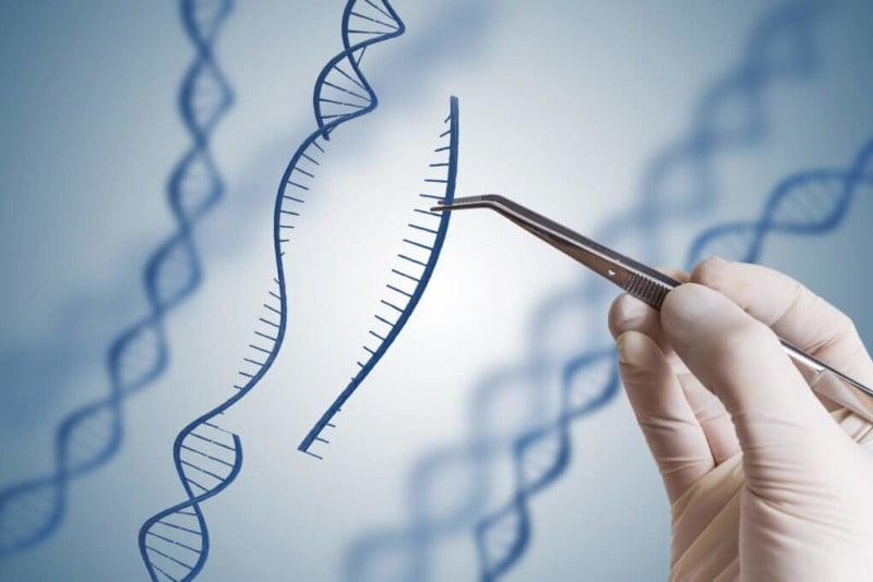 Con nueva tecnología de edición genómica, una startup y una universidad buscan revolucionar los productos vegetales