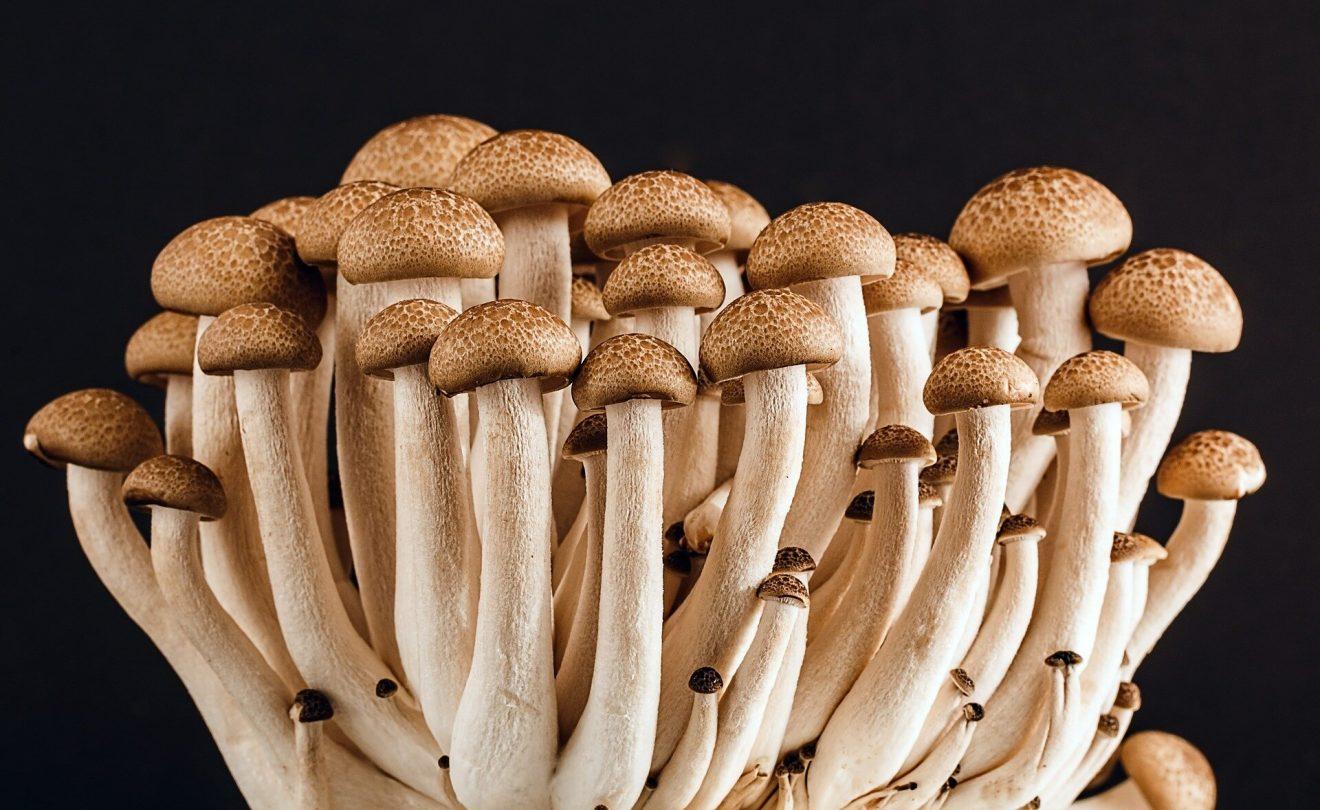 Biotecnología aplicada a los hongos: el futuro de la industria sostenible
