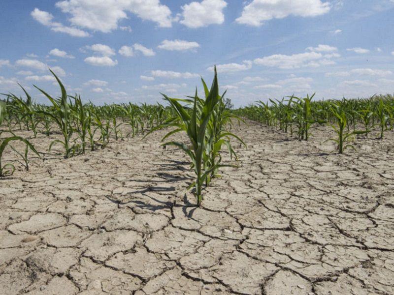 Hallan una función esencial en una proteína vegetal para el desarrollo de cultivos tolerantes a la sequía