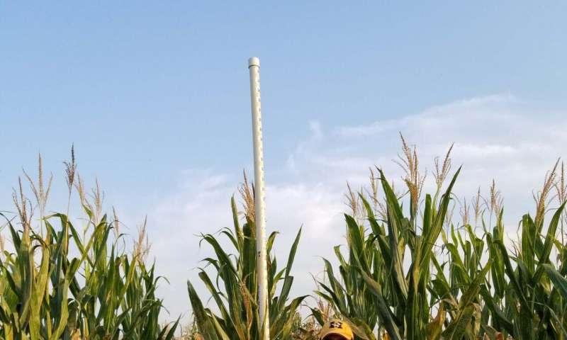 Nuevo método de identificación de genes vegetales promete garantizar la seguridad alimentaria