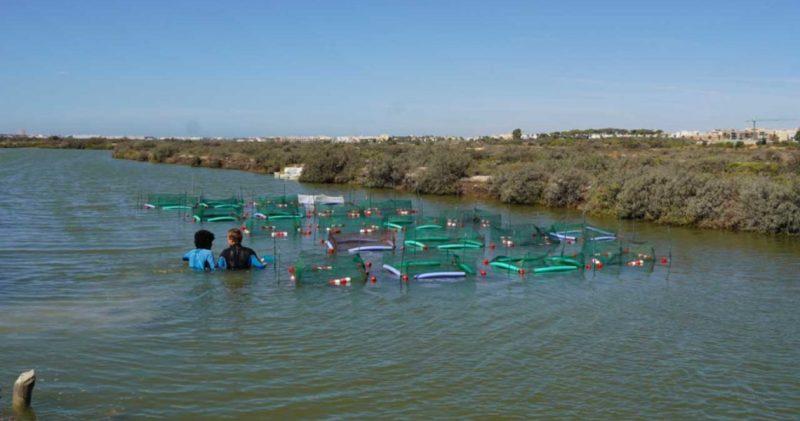 De la producción de sal a la economía circular en la bahía de Cádiz