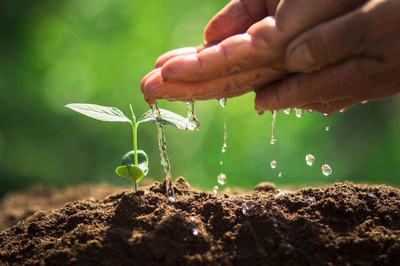 ¿Cuánto se paga la tonelada de carbono secuestrado por la agricultura?
