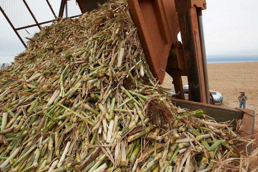 Efectos del preprocesamiento de biomasa y su eficiencia en la producción de energía