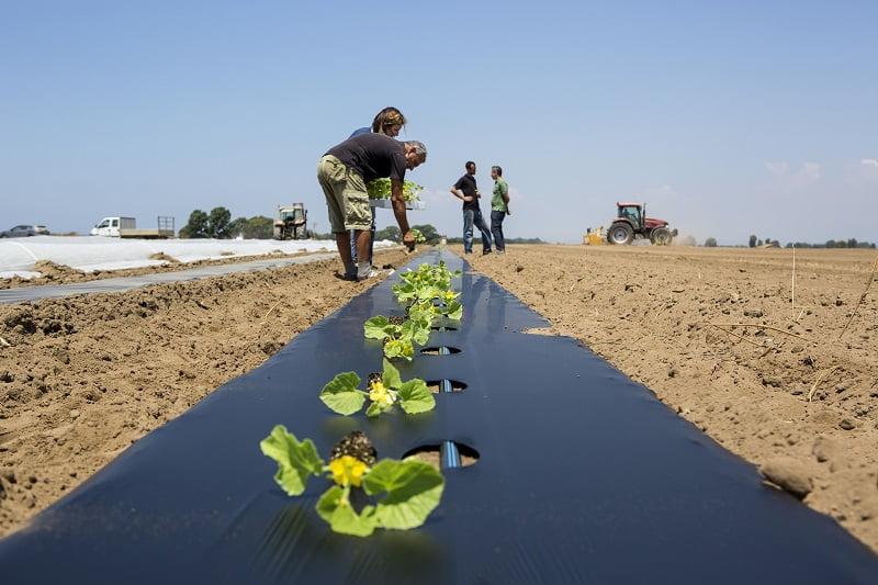 El rol de los bioplásticos en el cultivo de tomates