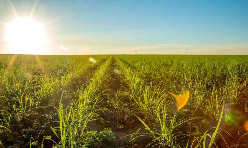 Brasil: temen que el aumento de demanda de Etanol impacte en el uso de la tierra