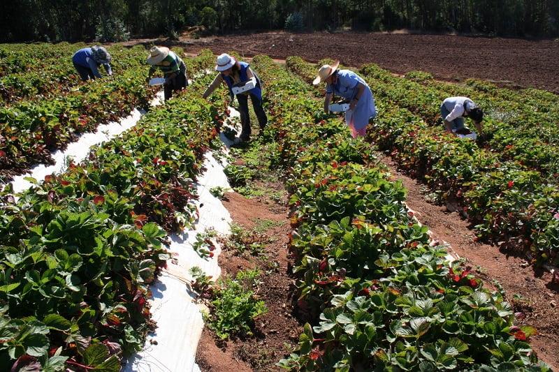 Destacan fortalezas del modelo cooperativo para dar mayor impulso al sector agrícola de las Américas