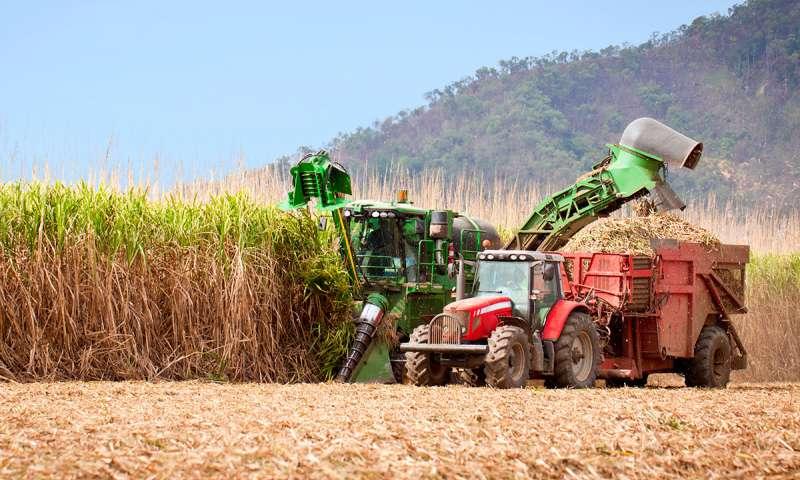Agricultores brasileros reclaman una Ley que les permita acceder a los beneficios de los CBios: los créditos de descarbonización por biocombustibles