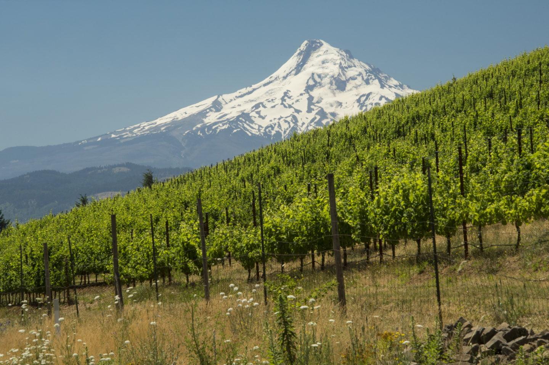 Entendiendo las diferencias entre los vinos sostenibles, orgánicos y biodinámicos