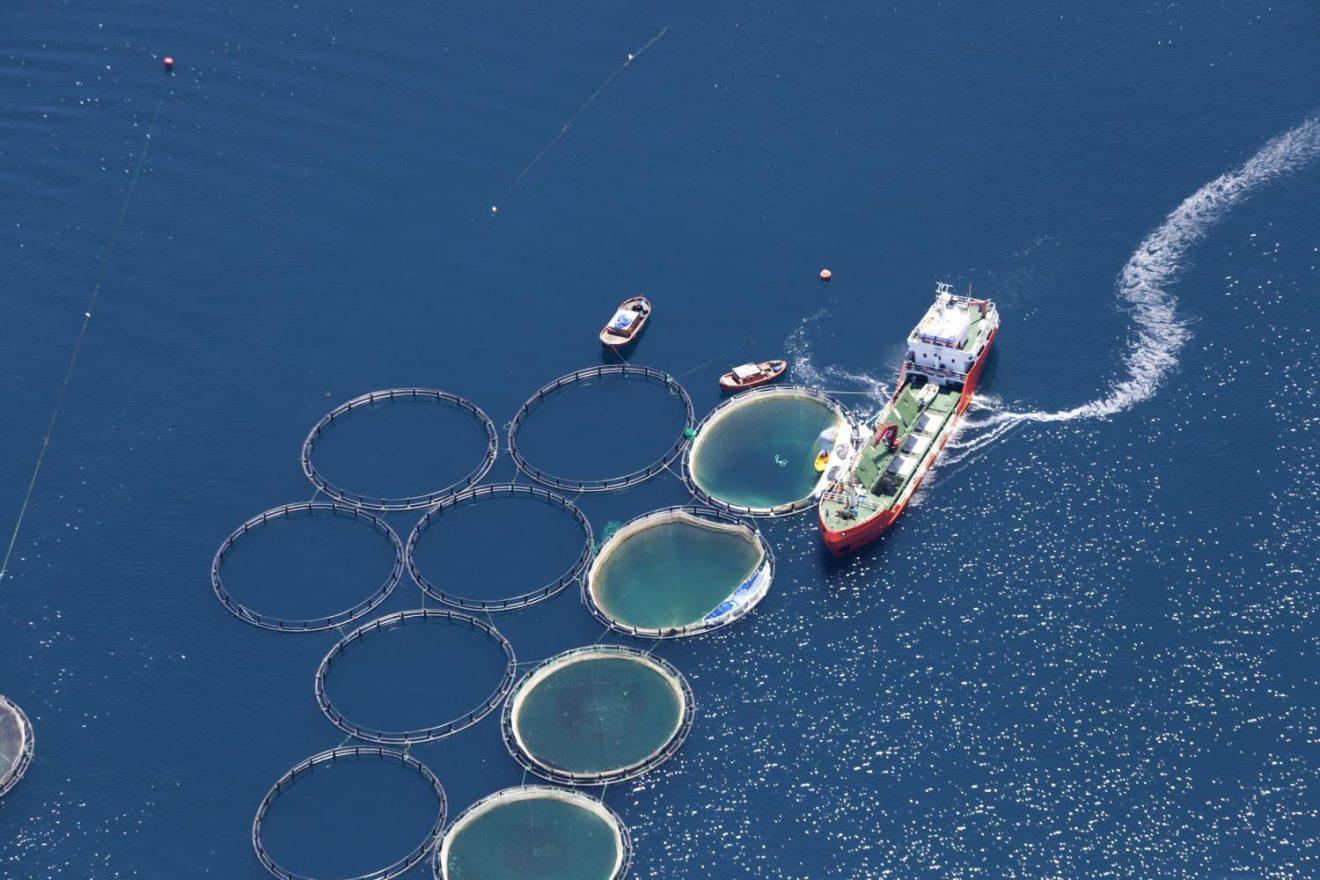 Buscan desarrollar cuerdas biológicas para hacer la acuicultura más sustentable