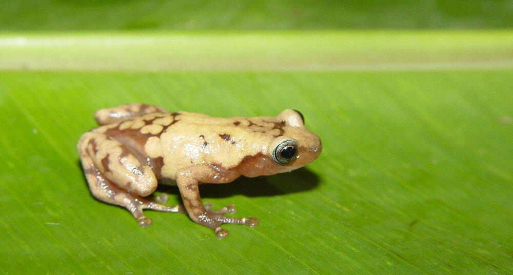 Estudio alerta que un tercio de las especies de plantas y animales podrían desaparecer en 50 años