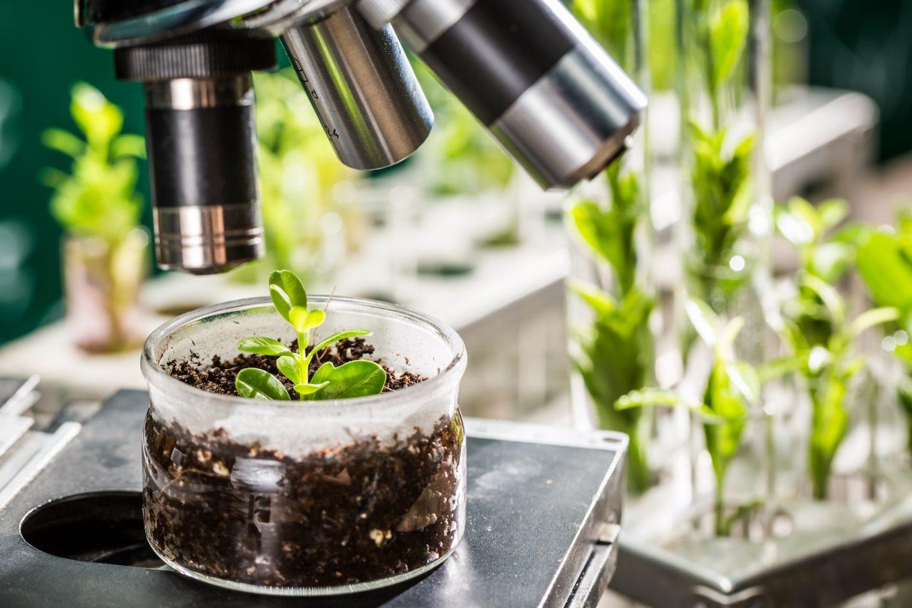 La ciencia en el centro de la bioeconomía