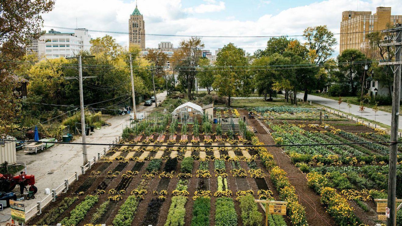 El potencial de la agricultura urbana para la seguridad alimentaria del Reino Unido