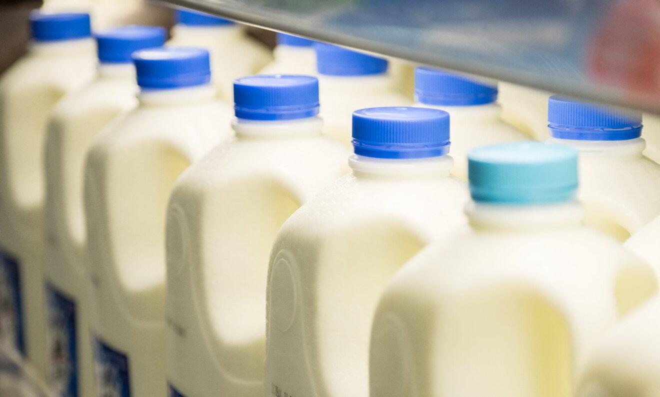 """Para evitar """"lagos de leche"""" Eurodiputados quieren obligar a los tambos a producir menos"""