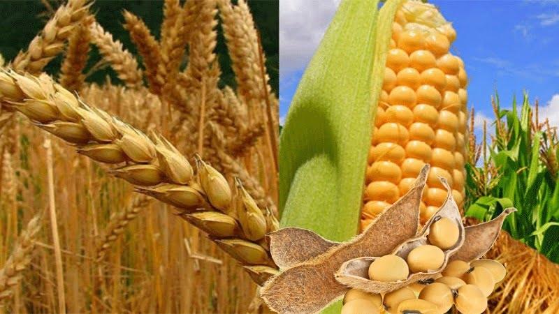 En evento de alto nivel, expertos de las Américas destacan la importancia de los cereales y oleaginosas en los sistemas agroalimentarios sostenibles