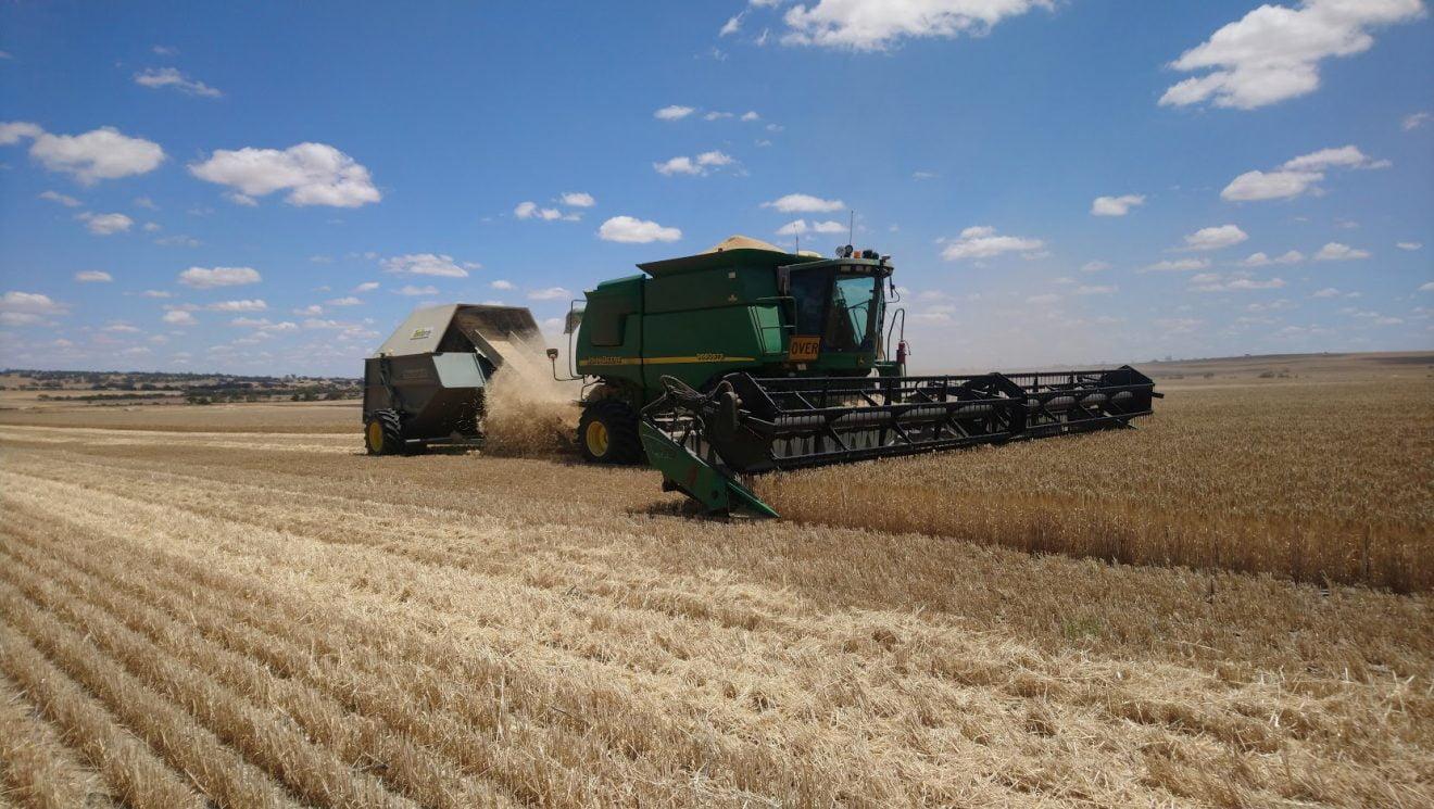 China impone aranceles del 80% a la cebada australiana ¿Represalia?