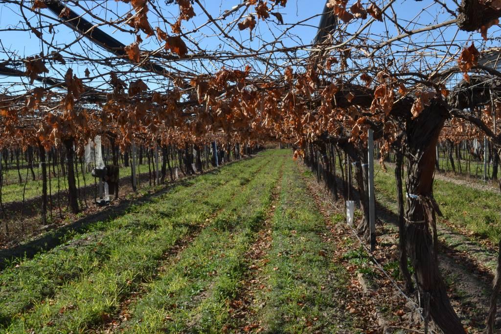 Bodega Santa Julia certifica sus vinos como veganos