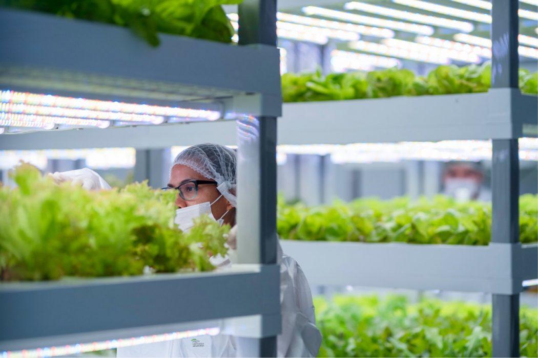 Chile se trepa a la agricultura vertical