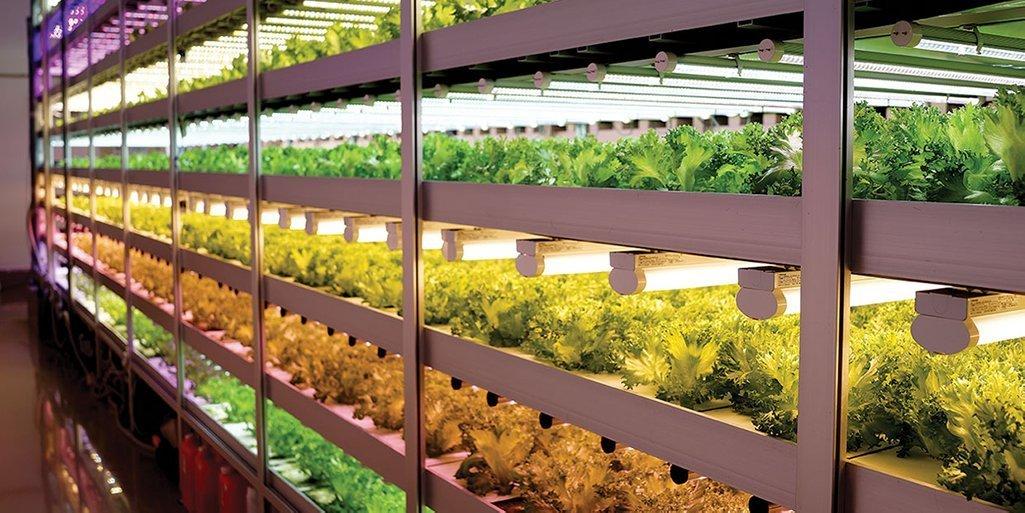 Espacio para crecer o crecer en el espacio: el fenómeno de la granjas verticales