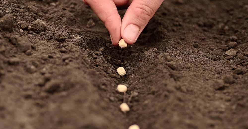Expertos analizaron el potencial del sector semillero en la Argentina