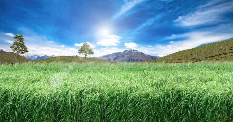 Grace: el proyecto para impulsar la bioeconomía con cañamo y miscanthus cultivados en tierras contaminadas