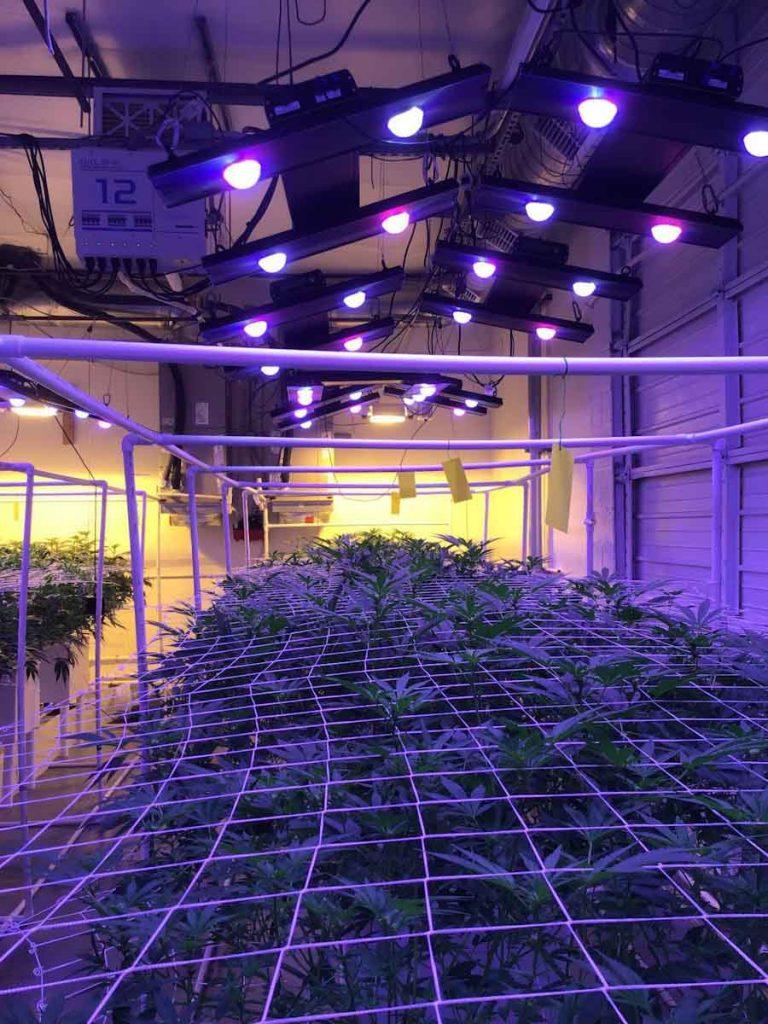 Las tecnologías israelitas que empujan la agricultura hacia sistemas interiores