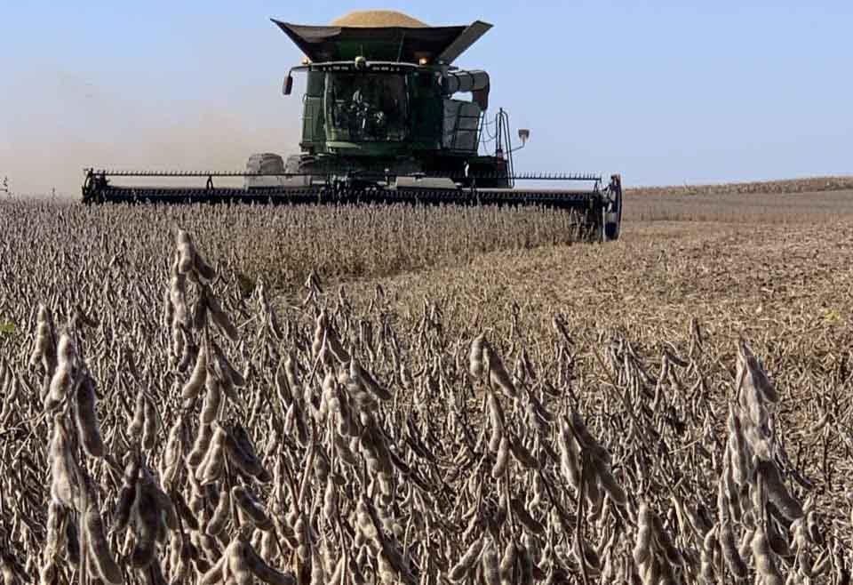 Alcanzando los 100 quintales de soja en secano