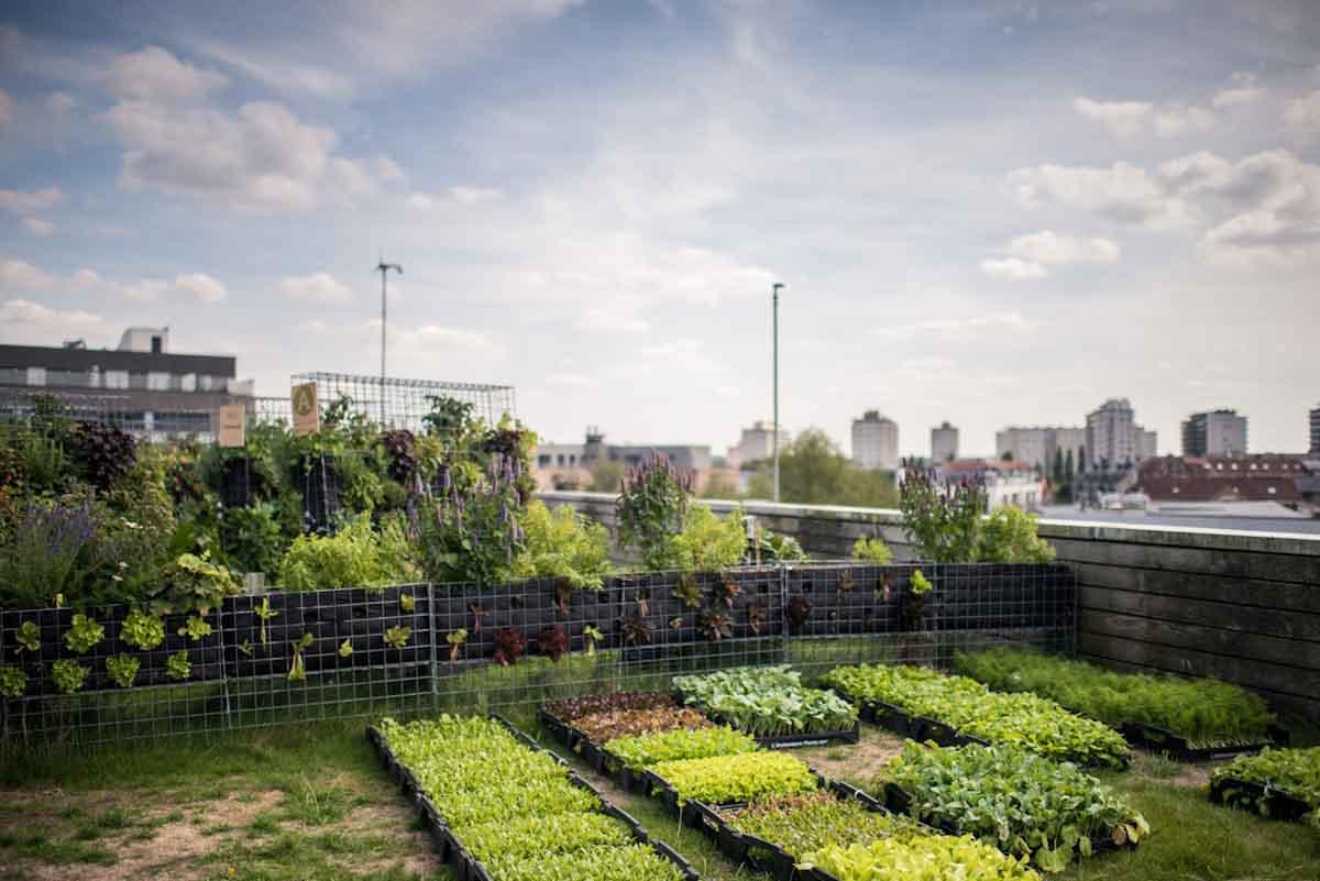 Peas&Love, la startup que permite a cualquier persona convertirse en agricultor urbano