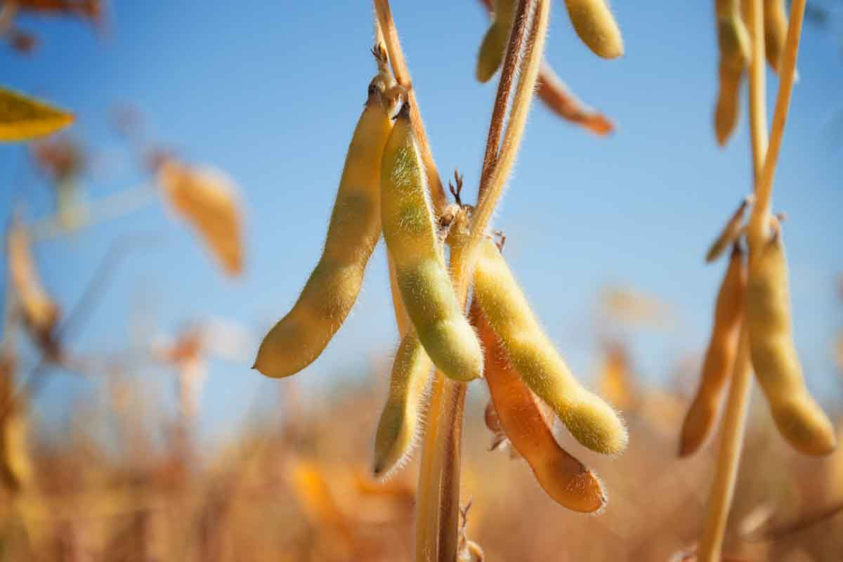 EEUU: Cargill brinda apoyo a productores de soja y maíz para que se reconviertan a producción orgánica