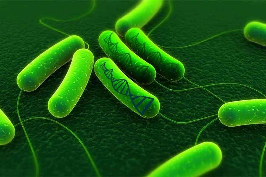 Los microbios le hacen frente al cambio climático