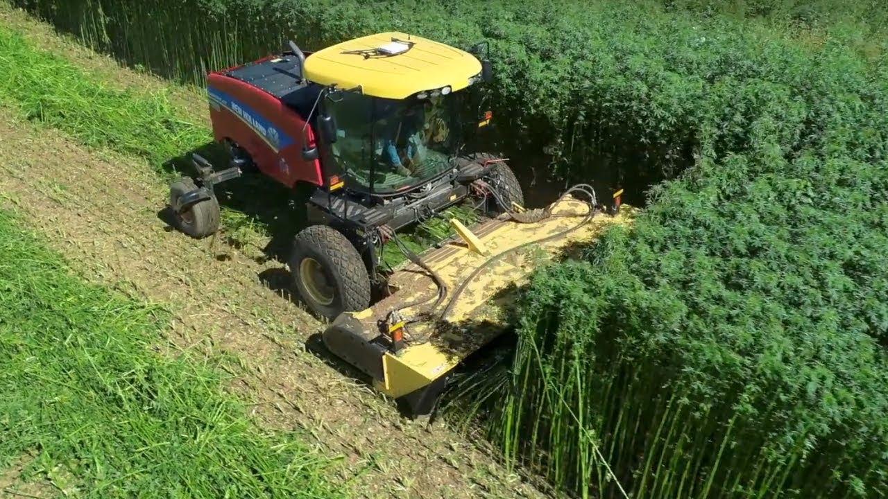 Departamento de Agricultura de EEUU busca que los productores incorporen el cáñamo en la rotación de cultivos