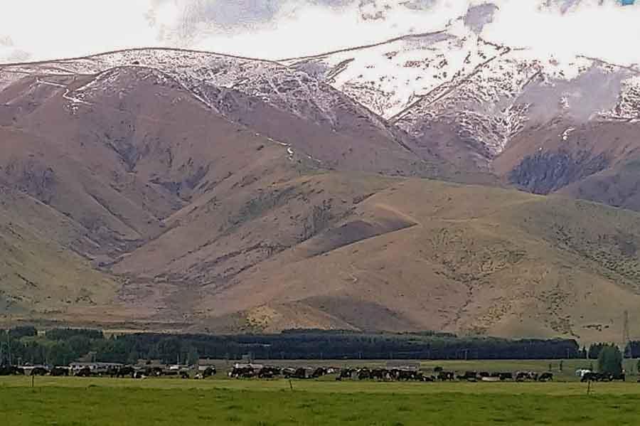 Fonterra se asocia con DSM para reducir las emisiones de metano en las vacas