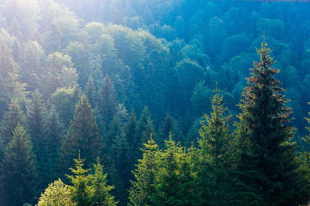 La silvicultura activa en la base de la bioeconomía europea
