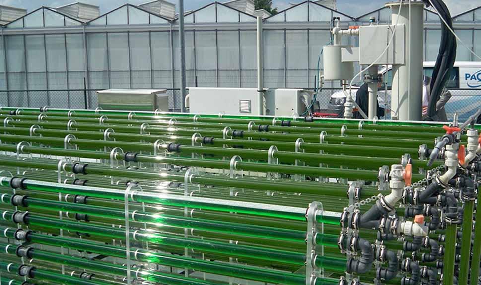 El rol de las microalgas en la bioeconomía