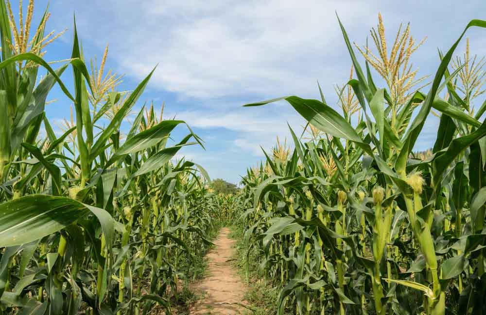 La industria semillera celebró un nuevo inicio de cosecha junto funcionarios nacionales