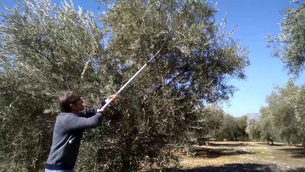 Argentina tendrá la primera planta de pellets para producir energía a partir de residuos de olivos