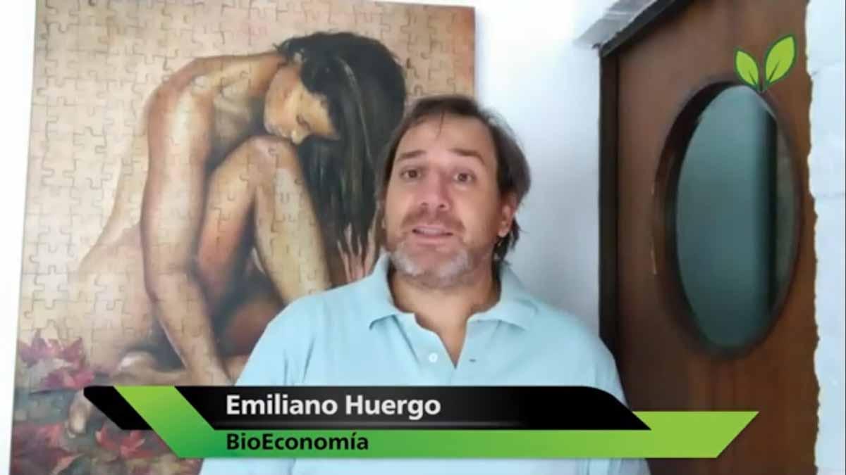 Bioceres y el molecular farming; la foto del campo de carinata; y la angustiante comparación con Brasil