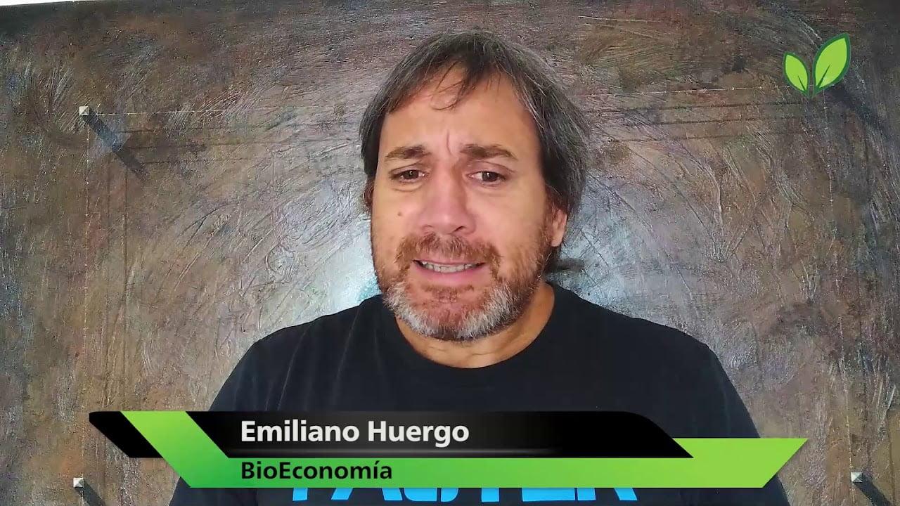 Cannabis si, bioenergías no