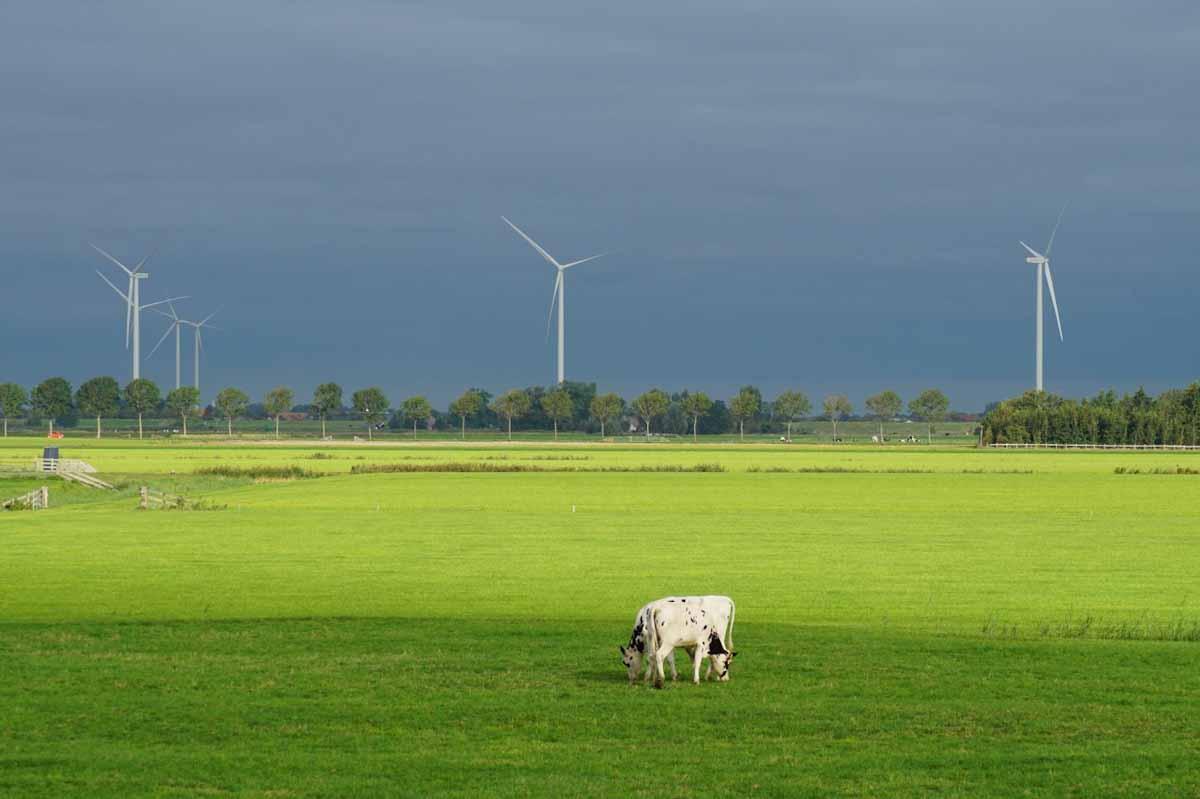 El revolucionario proyecto irlandés para lograr una agricultura neutra en carbono