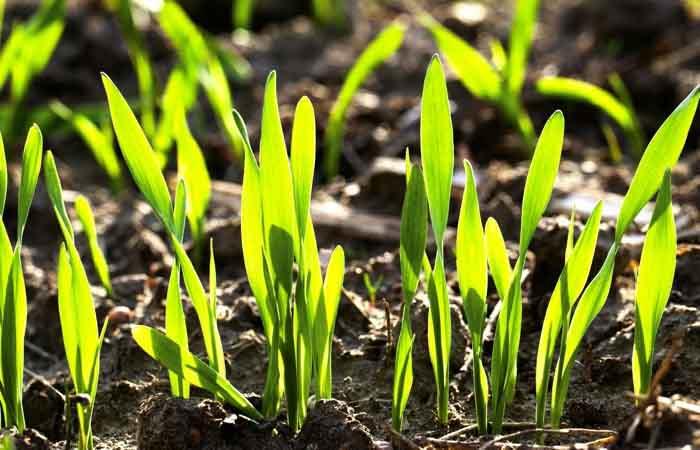 Huella de Carbono: Cómo fertilizar reduciendo las emisiones y aumentando la productividad