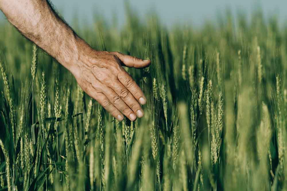 Agoro Carbon Alliance: la iniciativa de Yara para que agricultores obtengan ingresos por secuestrar carbono