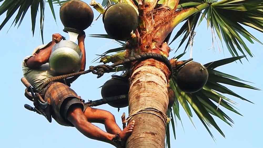 Vino de palma: una tradición en Nigeria que perdura en el tiempo 2