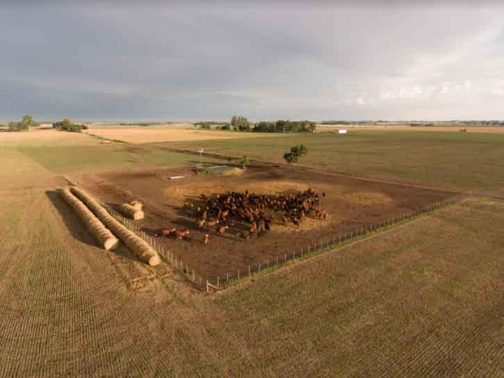 Día mundial del medio ambiente: la importancia de cuidar un recurso clave como el suelo