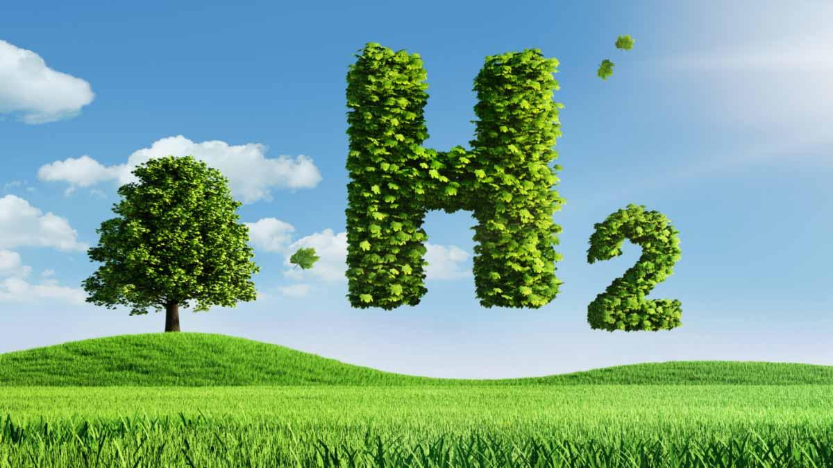 La compañía australiana que busca desbloquear el suministro de biomasa para la producción de hidrógeno