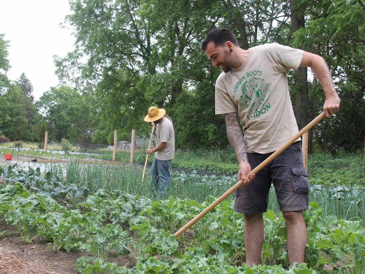 Canadá: Londres, urban farming