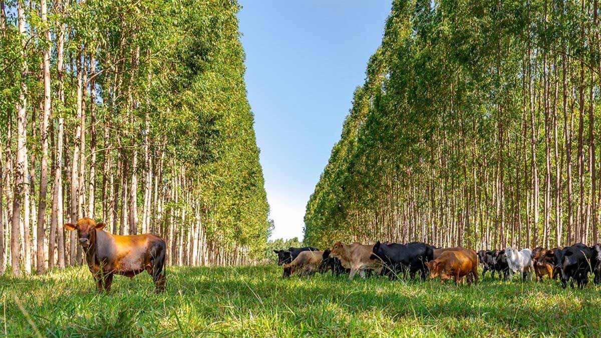 Santa Brígida Open Farm: cómo la agricultura atrae inversiones verdes